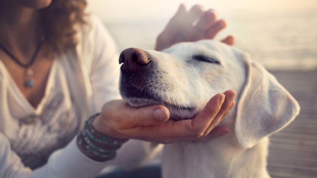 Working with an animal communicator