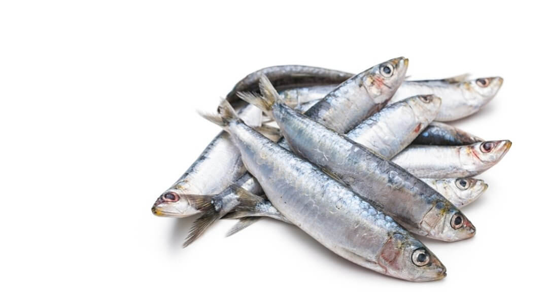Health benefits of feeding sardines