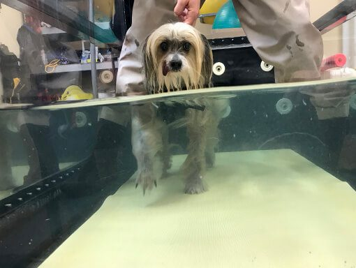 AJ in underwater treadmill