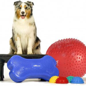 Collection of Fit Paws equipment for Gym in a Box