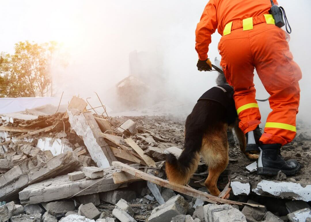 SARs working dog on rubble pile