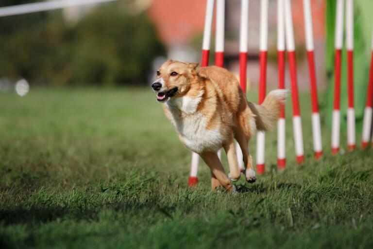 sport dogs needs fitness